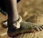 برده داری
