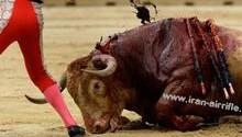 روش قربانی کردن زرتشتیان / کوبیدن بر سر گاو تا بمیرد